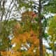 colored-leaves-photos-of-autumn-season-in-houston-texas