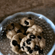 Allow cookie bites to cool. Enjoy with a coffee or glass of cold milk.