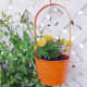 You can hang plants from a trellis or lattice.