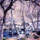 Oak Creek in Oak Creek Canyon