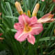 the-secret-gardens-of-the-salutation