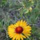 Wildflowers along the Corner Mountain Trail