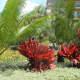 kauai-marriott-beach-resort-at-poipu-hawaii