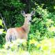 Deer photo I use to create digital art.