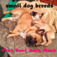 Small dog breeds do not always bark a lot.