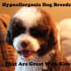 Hypoallergenic dog breeds that are great with kids.