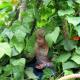 A child walks through a living playhouse.