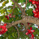 hawaii-tropical-fruits-the-mouth-watering-mountain-apple