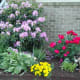 A mature Rhododendron shrub adds depth and new color to this space.