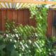 I love the way the trellis roof looks! It also provides limited shade for the vegetable and herbs below. As you can see, those green bean plants are on its way to the top.