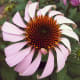 This coneflower reminded me of a pinwheel!