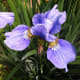 top-low-maintenance-perennials-with-beautiful-flowers