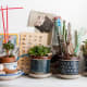 Mug succulents using Mediterranean-style colors look great on a desk or in a study.