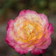 how-to-grow-beautiful-flowers-that-will-flourish-in-dry-conditions