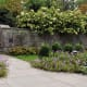 Paniculata hydrangea (stone wall and stone steps for reference)