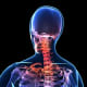 Lupus pain may also occur in the neck and shoulders.