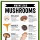 Mushrooms are like a probiotic in that they promote healthy gut bacteria.  The nerve cells in our gut manufacture 80 percent to 90 percent of our body's serotonin.  Serotonin is the critical neurotransmitter that keeps us sane and free of the blahs.