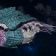 "Tyranid Battle Cruiser - ""Corrosive Tentacles Devourer"" - [Tiamet Sub-Faction]"