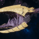 "Tyranid Frigate - ""Clutch Kraken"" - [Jormungandr Sub-Faction]"