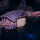 "Tyranid Frigate - ""Corrosive Kraken"" - [Leviathan Sub-Faction]"