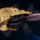 "Tyranid Cruiser - ""Bio Projectile Razorfiend"" - [Jormungandr Sub-Faction]"