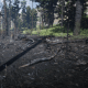 The Volatile Fire Bottle Pamphlet can very appropriately be appropriated in this burned section of forest.