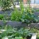 A school garden next to a natural play area