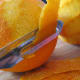 Peeling the oranges, avoiding the white pith.