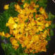 Add the squash and cook 1-2 minutes.