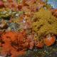 Add the masala powders.