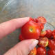 I slice my cherry tomatoes right through the center where the stem attaches