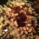 Add mushrooms, Kalamata olives and sun dried tomatoes.