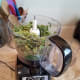 making-your-own-dried-parsley-at-home
