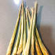 Lemongrass has a rich citrus smell that I really love.