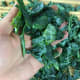 Roughly chop the kale into medium, bite-sized pieces.