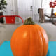 Bright orange small-sized pumpkin. This type of pumpkin would be suitable for making a pumpkin pie, as well.