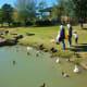 People having fun feeding the ducks
