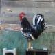 Exchequer leghorn rooster