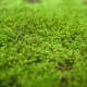 Bryophytes are types of plants. Common bryophytes found in Indonesia.