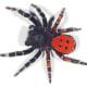 The velvet spider.