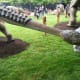 The tail of Dyoplosaurus