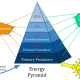 Energy pyramid in an ecosystem