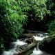 Saola habitat, Au Rong, Greater Annamites, central Vietnam. © Jeremy Holden/WWF