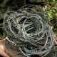 Patrol team with wire snares collected in saola habitat, central Laos (Nakai-Nam Theun National Protected Area), 2009. © William Robichaud