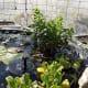 edible-aquatic-plants