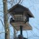 Blue Jay and Downy Woodpecker