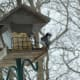 Finch and Hairy Woodpecker