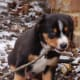 what-to-get-for-a-new-puppy-the-big-list-of-must-have-supplies-for-a-puppy