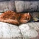 Tigger falls asleep reading.   (In memoriam: Our dear Tigger crossed the Rainbow Bridge in March of 2016, at the ripe old age of 16 years.)