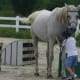 Kids and horses - a great combination!